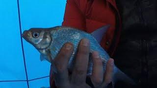 Зимняя рыбалка Курминский залив Сезон 2020 2021