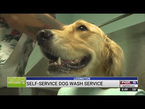 Small Business Spotlight: Fetch Self-Service Dog Wash And Boutique