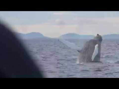 Whale Watching 2016-0830-1