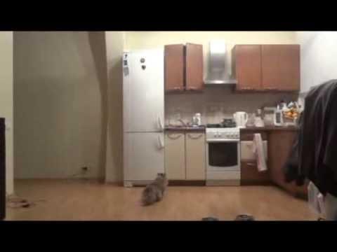 Cats See Ghosts ( кошки видят призраков ) 2 часть