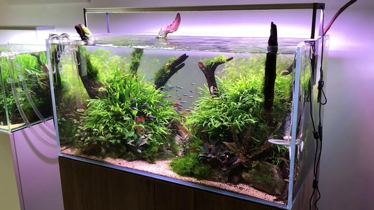 90cm Aquascape Layout Concave Composition With Riverwood Youtube