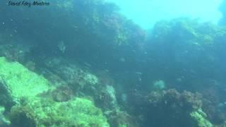 Pesca Submarina en poco fondo  Jugando con la marea