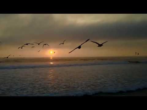 Freedom - Valdi Sabev - 18 De Setembro De 2019
