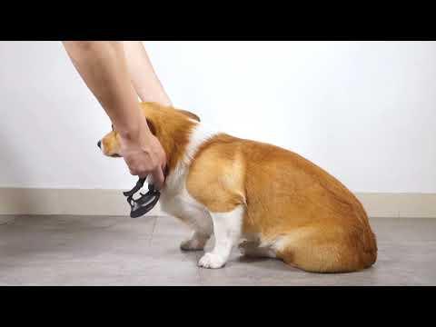 How to Use DogCare Dog Training Collar TC-05