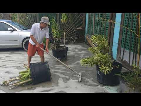 Noticias del Mundo La destruccion en Marco Island, la pequena ciudad de ... 12/09/17