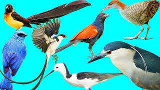 عبيد العوني في محمية سامي للطيور الجزء1 Bird Park