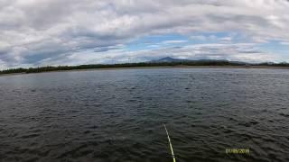 Фантастична рибалка на Горбушу! Хоча б раз у житті треба побувати на такій рибалці!!! Колима.