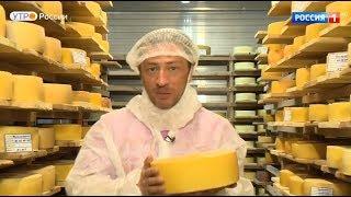 Насколько качественный сыр в России?