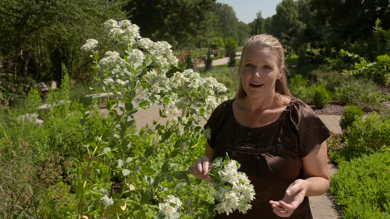 best of oklahoma gardening  native  u0026 tough plants   4524  12  15  18
