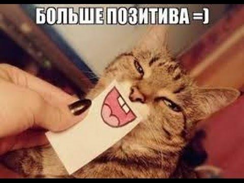 Новые приколы про котов » Приколы, фото и видео приколы