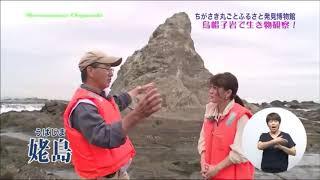 烏帽子岩で生き物観察!