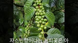 대전세종커피바리스타학원 대전세종국비학원 50년전통 홍명…