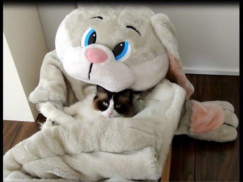 Timo the Ragdoll Cat & his sleeping bag