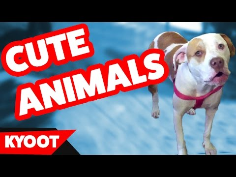 Funniest Secret Life Of Pets Home Videos Caught On Tape Weekly Compilation | Kyoot Animals