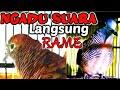 Adu Suara Perkutut Lokal Saling Sahut Bikin Rumah Jadi Rame  Mp3 - Mp4 Download