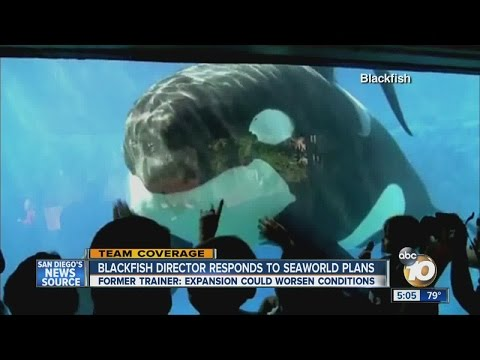 'Blackfish' Director Responds To SeaWorld's Expansion Plans