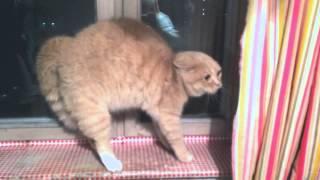 Довела кота до инфаркта / How to scare a cat
