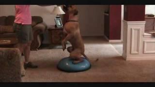 Dog Training - Core, Balance And Stretching