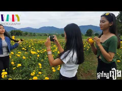 Cambodia Traveling in Pailin Province beautiful flower_ Screen Post
