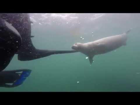 SEAL RIPS APART DIVERS FOOT