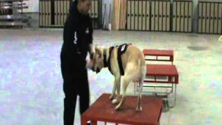 K9 Disaster Obedience, Agility And Directional Control Training