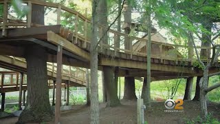 Microsoft Builds Treehouses For Employees