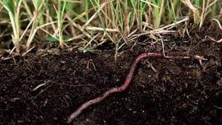 Малощетинковые черви. Биология 7 класс.