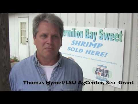 Vermilion Bay Sweet Shrimp - Gulf Seafood News