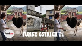 Ostrich Funny Moment P1 - Animal Lover 😂 😂 😂
