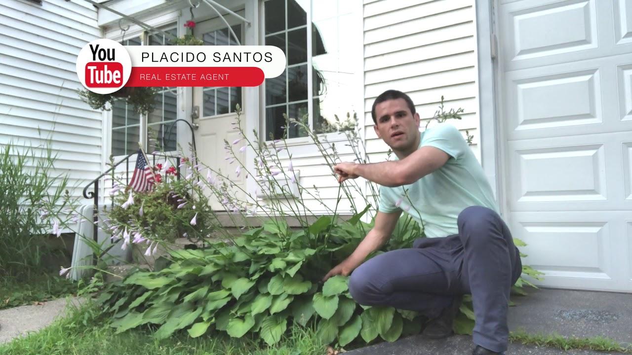 How To Properly Trim Hosta Flower Stems Placido Santos Real Estate