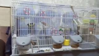 Анонс. Клетка для волнистых попугаев.