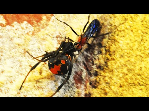 Viuda Negra vs Avispa Roja | Quin Ganara? | EPIC VERSUS