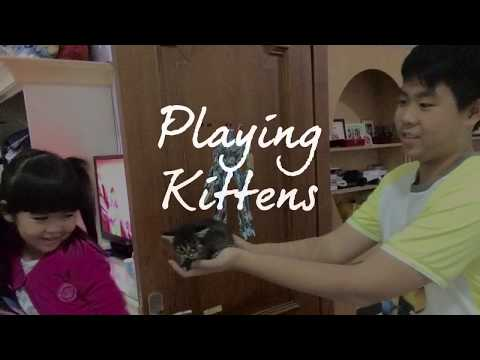 Playing with kittens