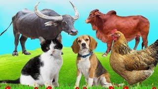 Bé Học Các Con Vật Quen Thuộc Con Trâu, Con Bò, Con Chó, Con Gà