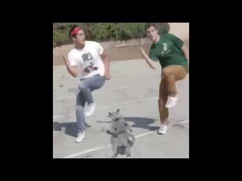 Cat Dancing to Nokia Tune (Original)