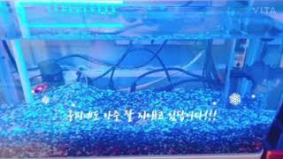 파란꼬리 빨간꼬리 물고기!!(곧 거북이의 생먹이가 될.…