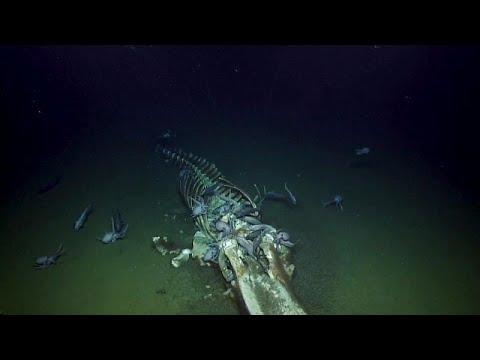 فيديو يحبس الأنفاس لوليمة في قعر البحر  - نشر قبل 15 دقيقة
