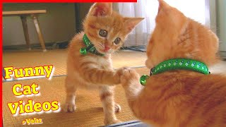 Funny Cat Videos #Vol11  Funny Cat Videos 2021  Cute Cat Videos 2021