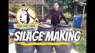 How do we make silage - Cebu Goat Farm