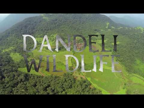 DANDELI WILDLIFE