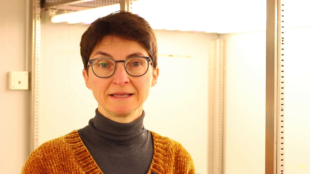 Yo investigo: María Romero (EEZ) - YouTube