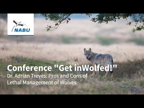 Dr. Adrian Treves: Pros and Cons of Lethal Management of Wolves