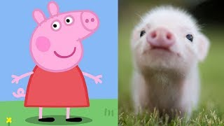Peppa pig characters in real life - Peppa George Zoe Kylie Danny Emily Candy Suzy Rebecca Freddy