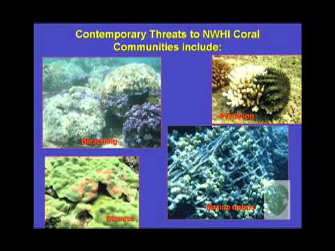Coral Community Structure at Pearl & Hermes Atolls NW Hawaiian Islands (Kenyon)