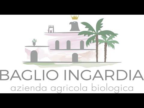 Baglio Ingardia Olive's harvest