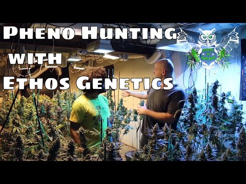 Future Cannabis Cup Entries With Colin Gordon Of Ethos Genetics | Pheno Hunting From Seed