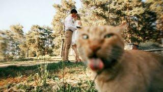 Эти забавные котики #3/This is Funny Cat(CatsLIVE)