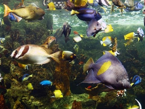 ♥♥ Coral Reef Fish with Relaxing Music (3 hours)