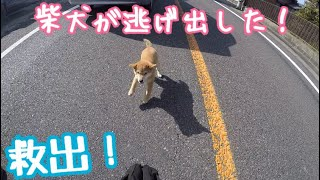【バイク】ツーリング中ハプニングに遭遇!道路で逃げ回る子犬の柴犬を救出!Capture the escape Shiba Inu!