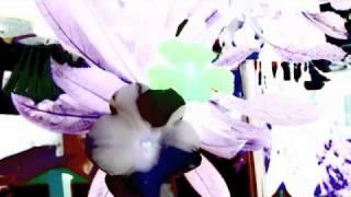 Buddy Rich - Waltz of the Mushroom Hunters